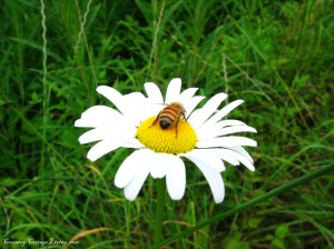 daisy-and-beeweb