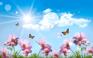 dream-summer-2012-beautiful-summer-day-for-cherie_2560x1600_96370